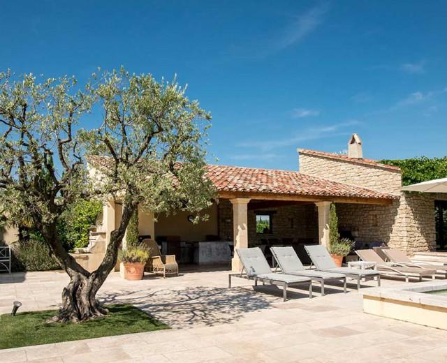 Terrasse et olivier